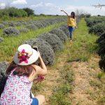 Viaje de solteros/ Proyecto Lavanda Guabajuto Foto: Rehiletes.com