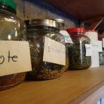 Taller de medicina tradicional