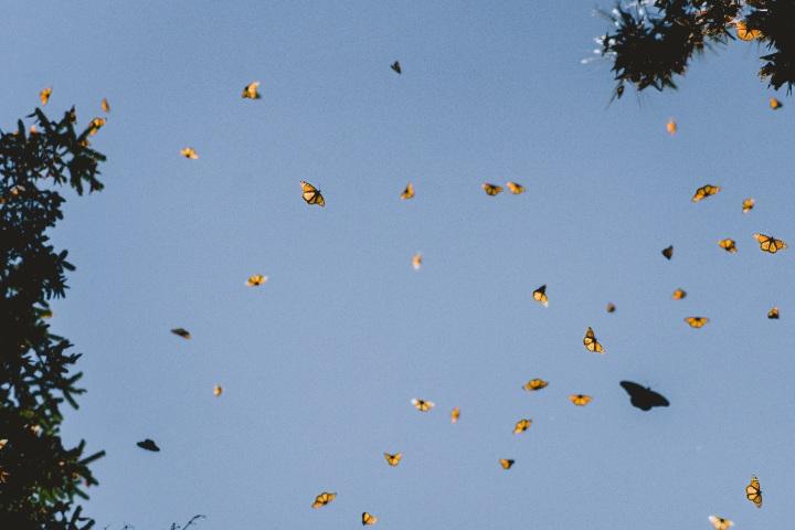 Cielos de mariposas. Foto: Shiebi AL